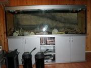 Продам аквариум 700 литров б/у с тумбой и импортным оборудованием.