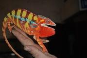 Большой выбор рептилий по низким ценам!